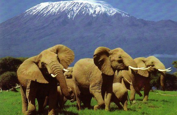 Jumbo Amboseli Safari