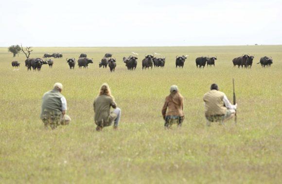 Splendor Safari