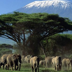 Amboseli Special