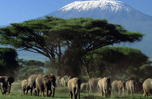 Amboseli Special