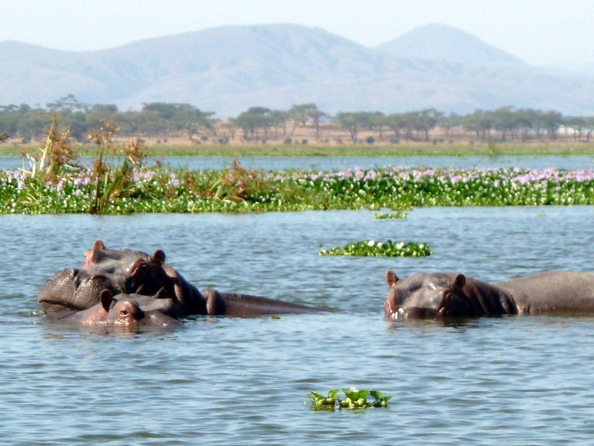 Jambo Kenya Safari